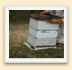 A top feeder consists of a shallow box full of sugar syrup that's placed on the top of a beehive.